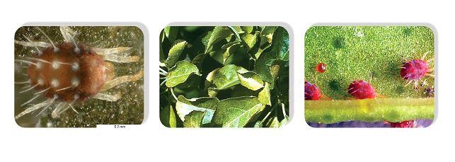 لیست قیمت محصولات - گیاه البرز