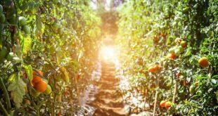 علف کش های کشاورزی با کیفیت